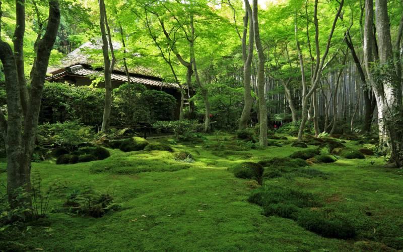 祇王寺/Giou-ji